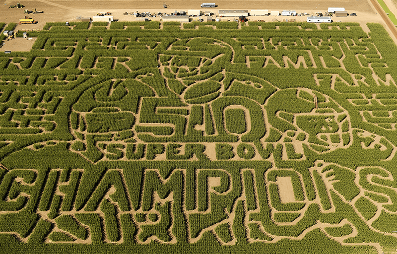 Denver Corn Maze